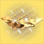 Teknősök Hibiscus Fából  Hibiscus Faágon