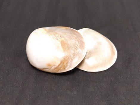 Operkulum csiga-Shíva szeme-nyers kagyló